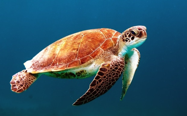 turtle-863336_1280.jpg