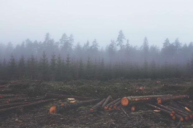 deforestation-351474_960_720.jpg