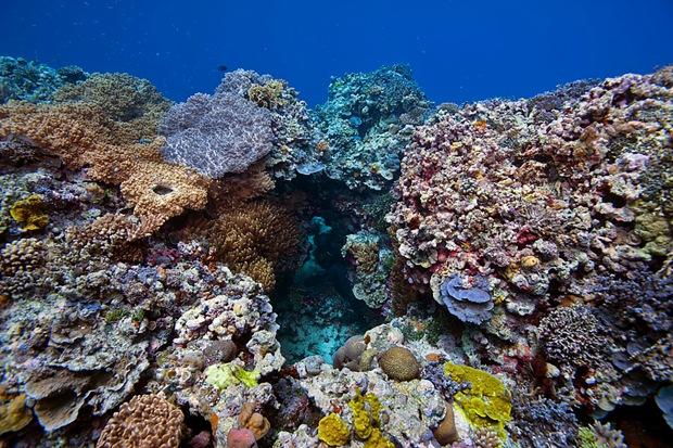 IYORBank_CoralReefs_TheOceanAgency_90.jpg