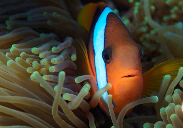 IYORImageBank_AnimalsontheReef_TheOceanAgency_40.jpg