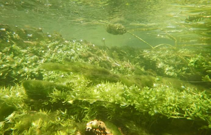 Paysage_subaquatique_Subaquatic_landscape_rivière__Les_Baillons__à_Enquin-sur-Baillons_F_Lamiot_12.jpg