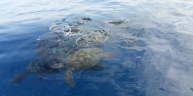 Rescue at sea: Helping our honu